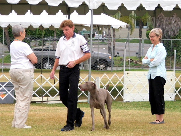 www.southlandweimaranerclub.com - 2014 WCA Nationals - Crack Obedience 1