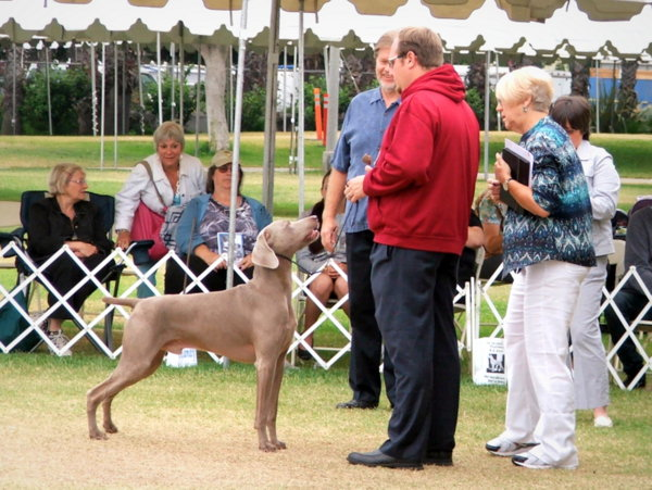 www.southlandweimaranerclub.com - 2014 WCA Nationals - Judges Ed1 - Copy